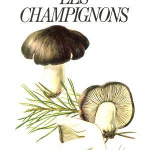 Les champignons – Mirko Svrcek – Marabout – guide série nature –